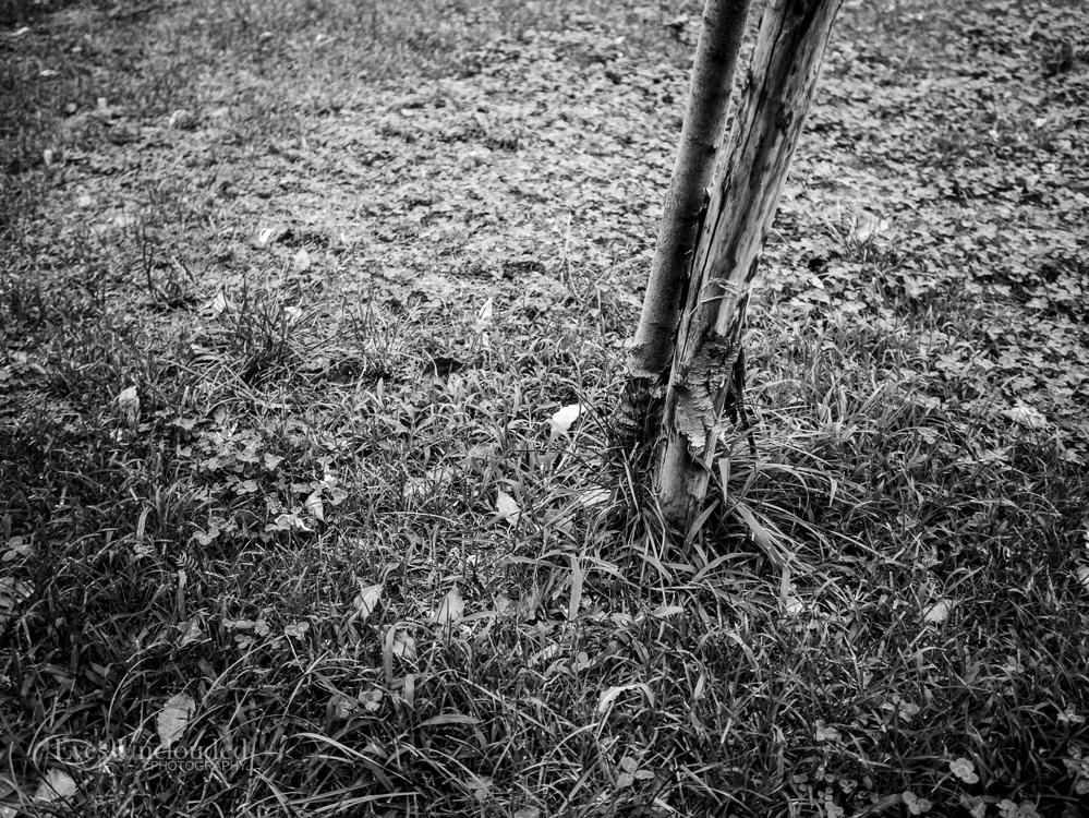G7, Olympus 17mm f/1.8