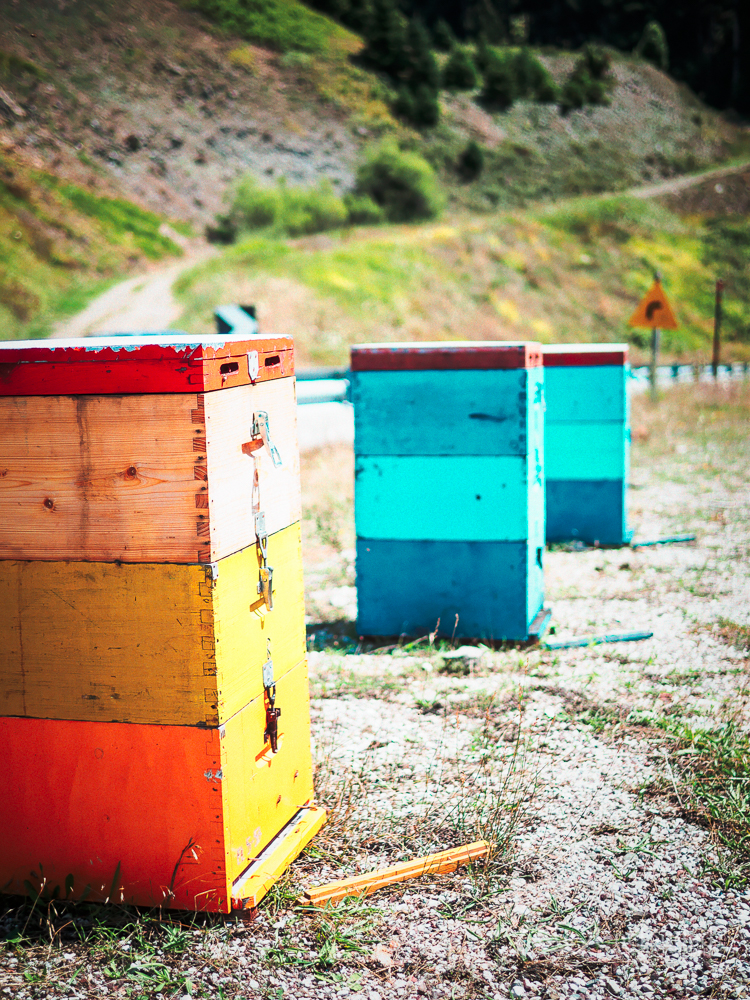 Bee-hives high on the mountains