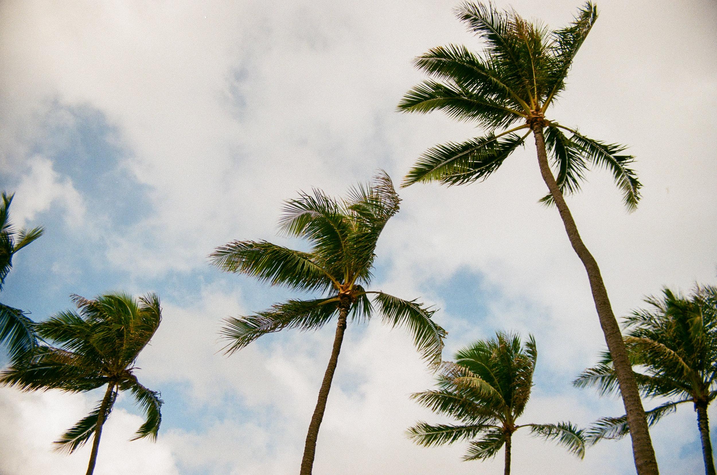 """Dancing Palms"""