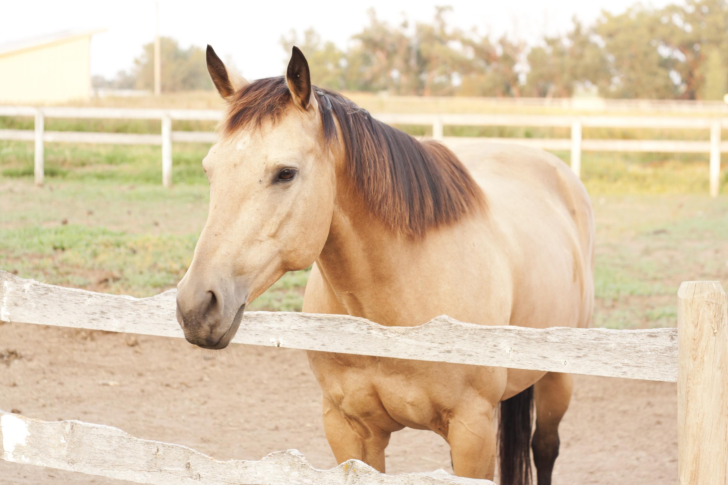 Horses_38.jpg