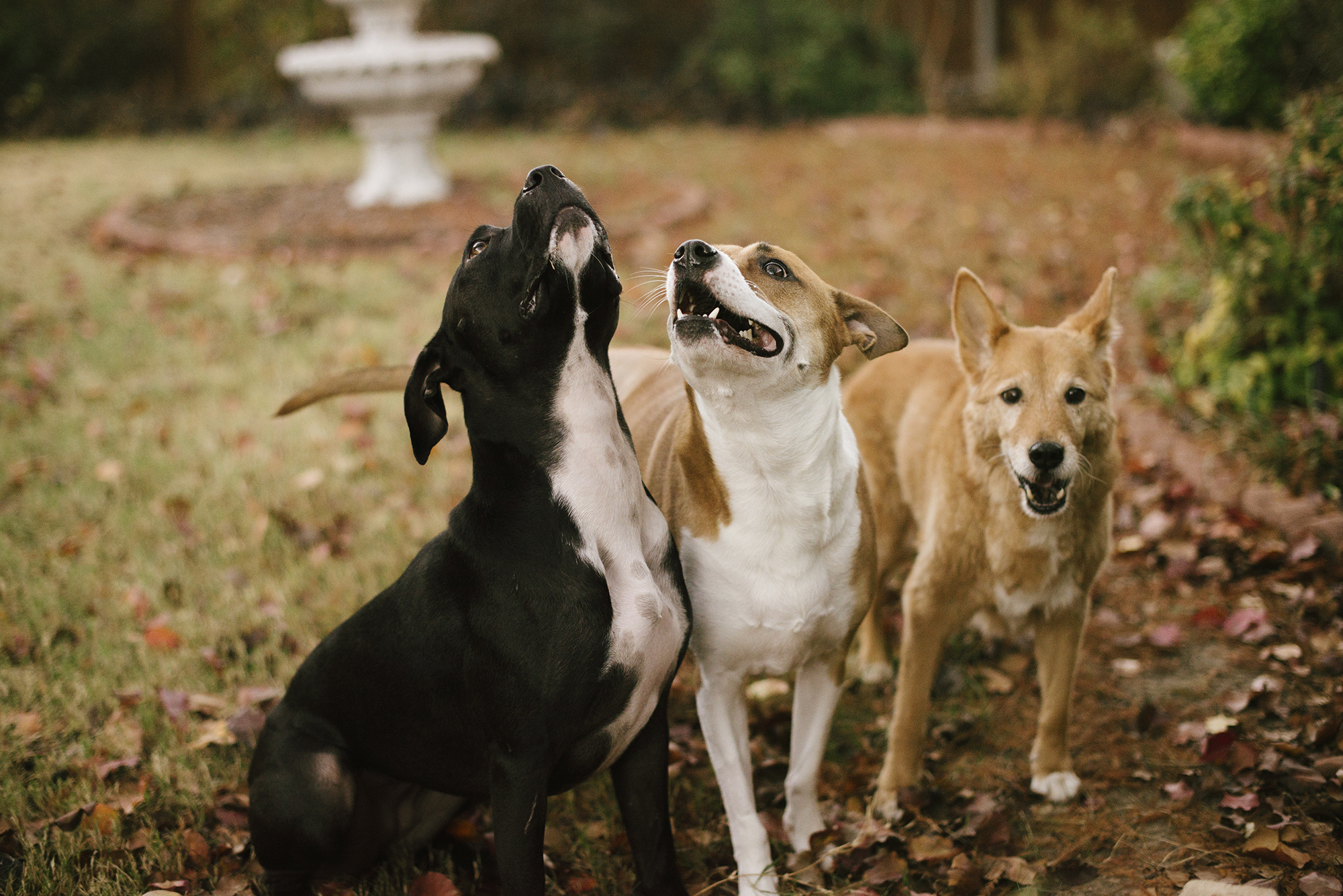 doof, doofer, and doofest.jpg