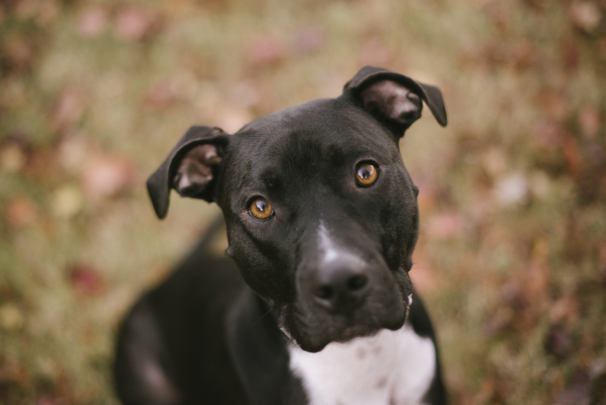 Charlie (Pitty mix)