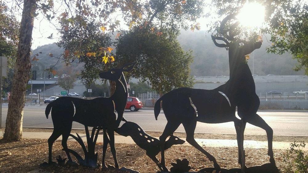 Deer Sun 2.jpg