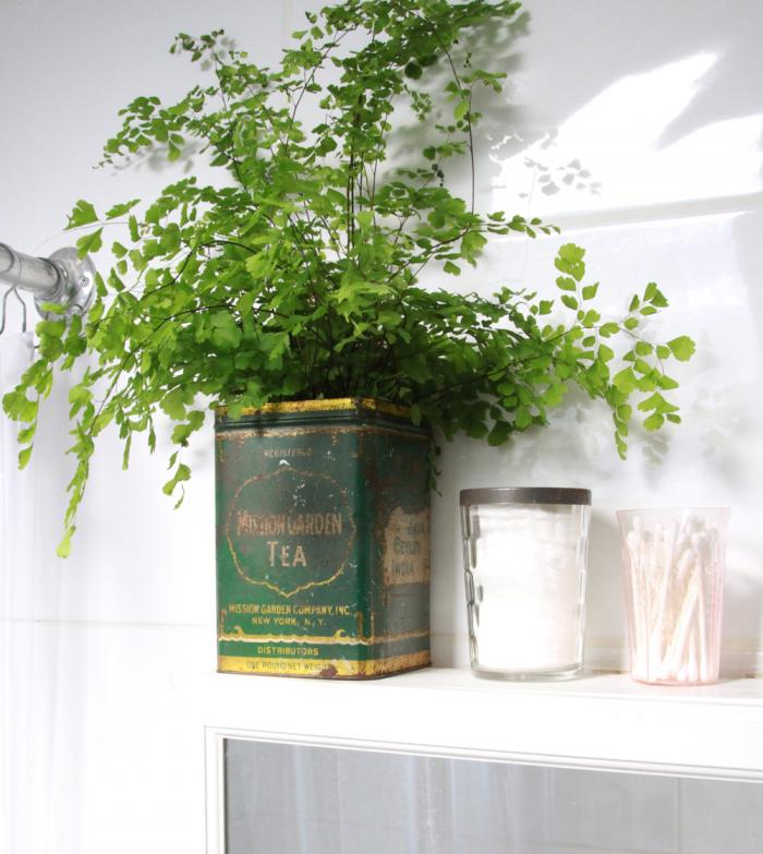 700_button-fern-in-antique-tea-tin.jpg