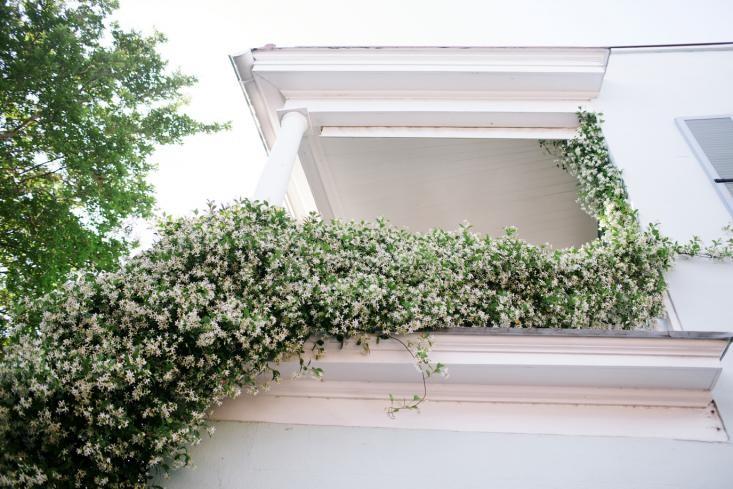 jasmine-curb-appeal-gardenista.jpg