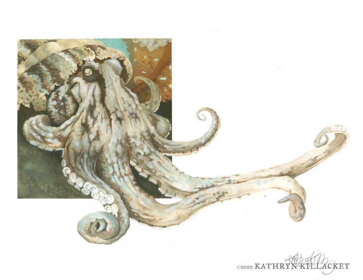 Octopus_Killackey.jpg