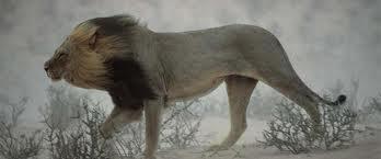 leijona.jpg