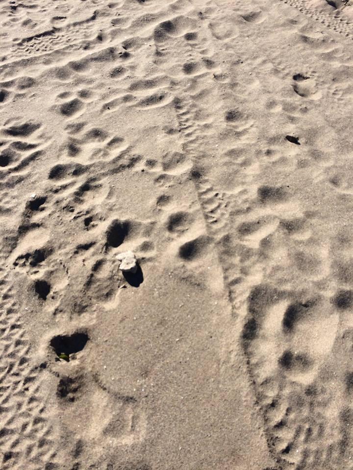hiekka.jpg