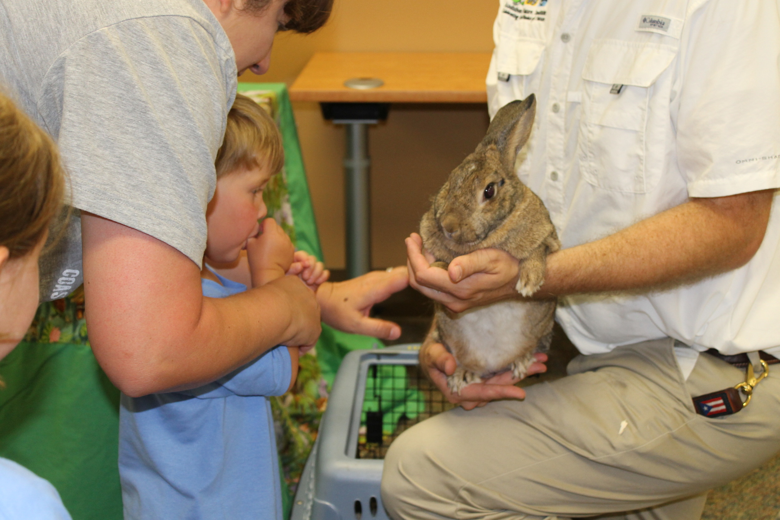 Petting the bunny