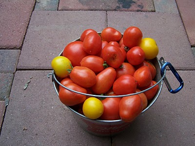 tomatoes_bucket+full.JPG