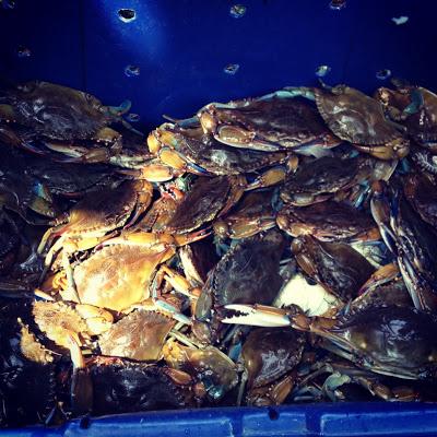 blue+crab.JPG