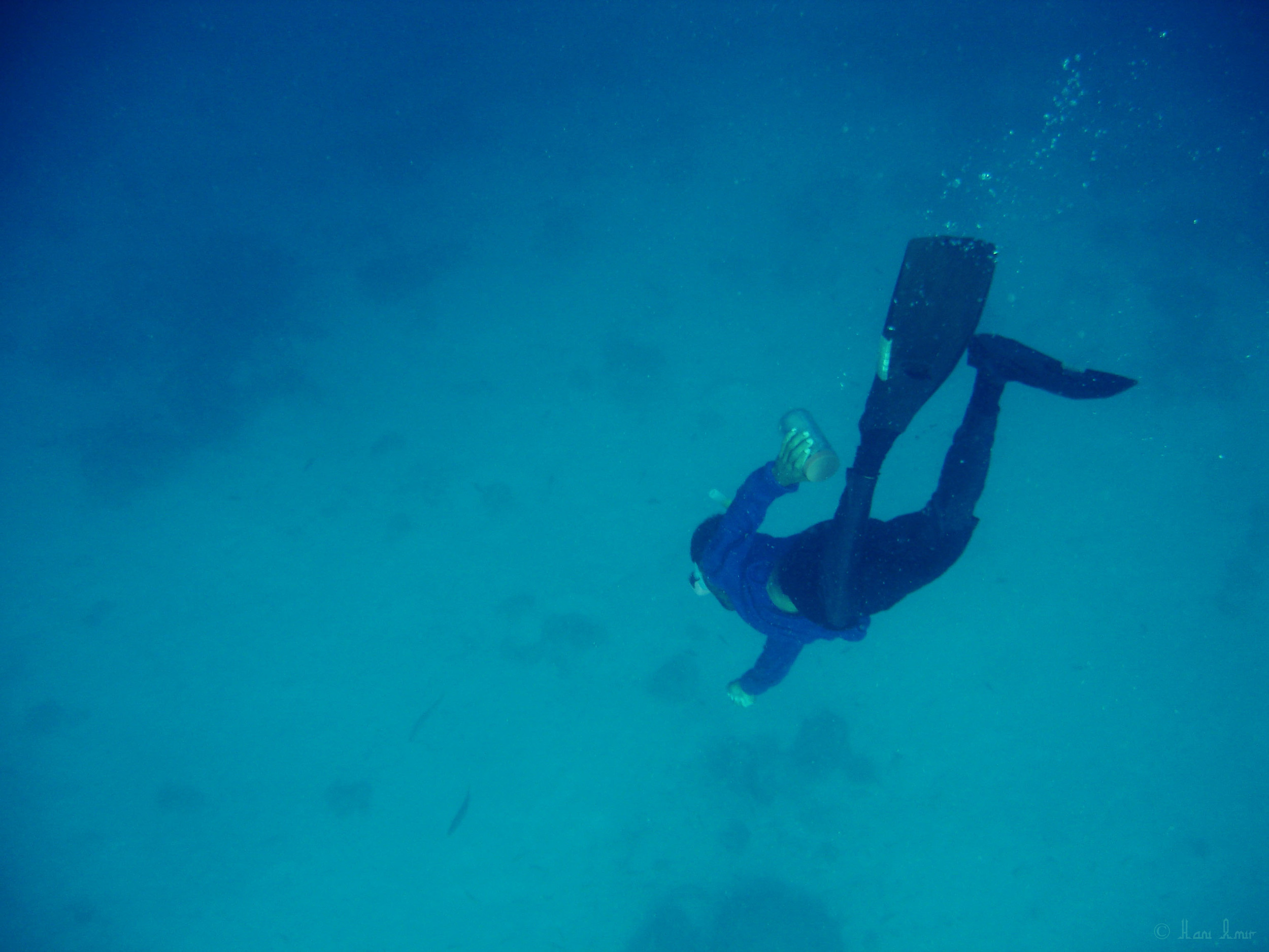 A slow and steady descent; almost to the bottom of reef.