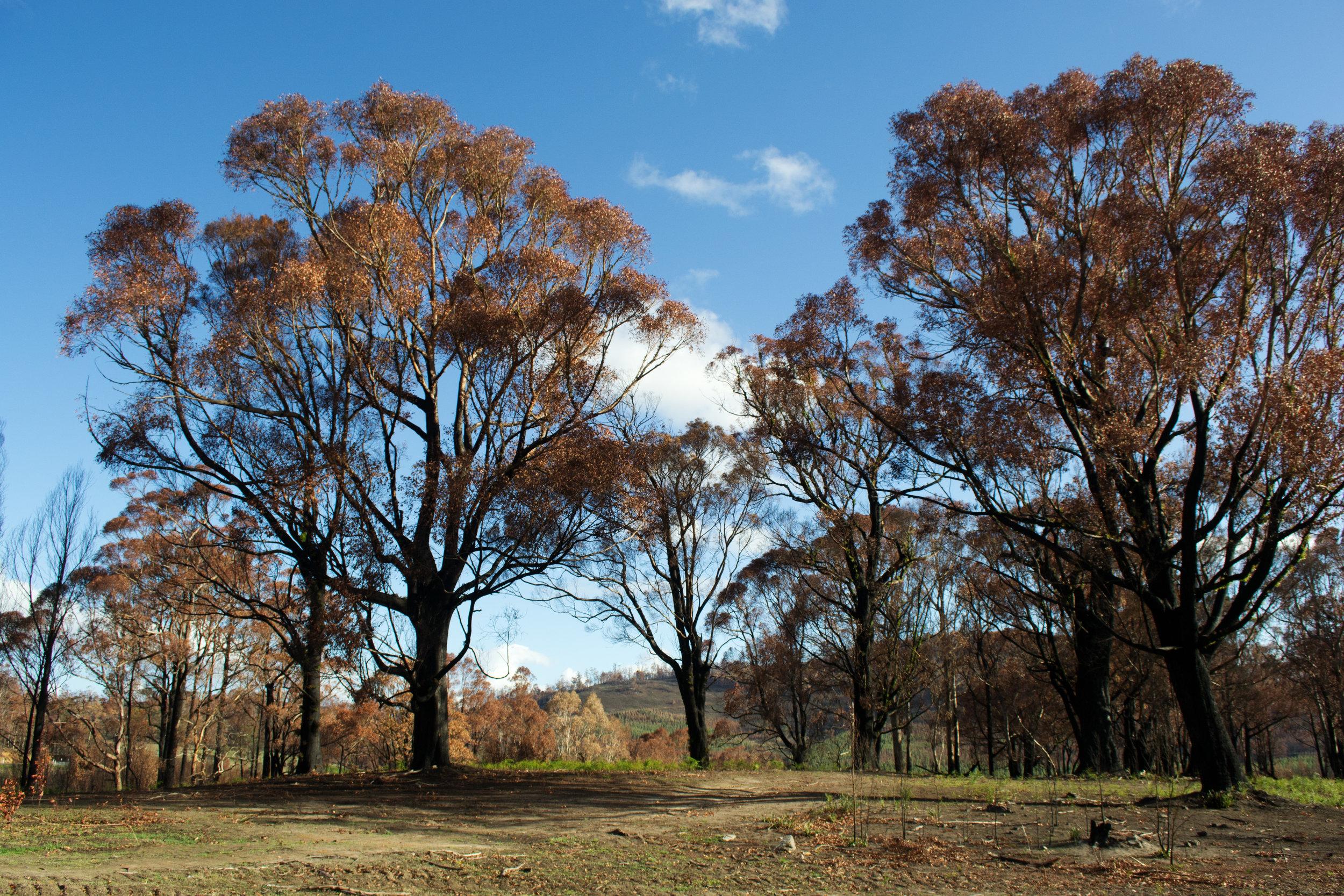 2013-02-28 - Tasmania - Dunalley after the fires - D3100  - DSC_0343.jpg
