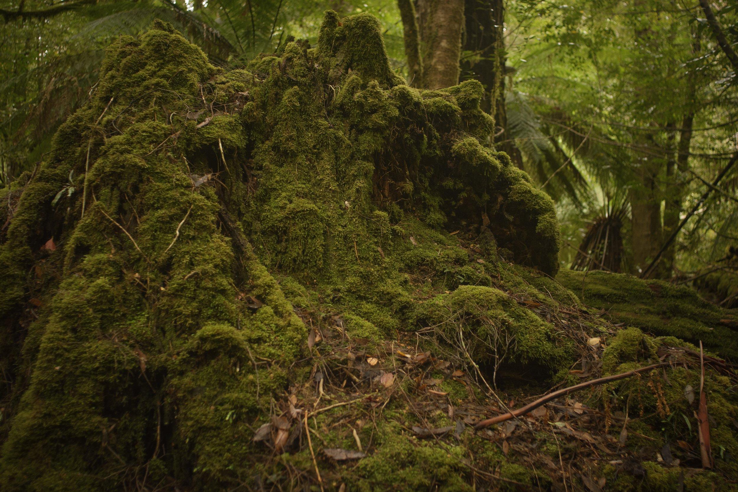 Nikon D7100.  Growling Swallet Track.  Tasmania, Australia.  (2018)