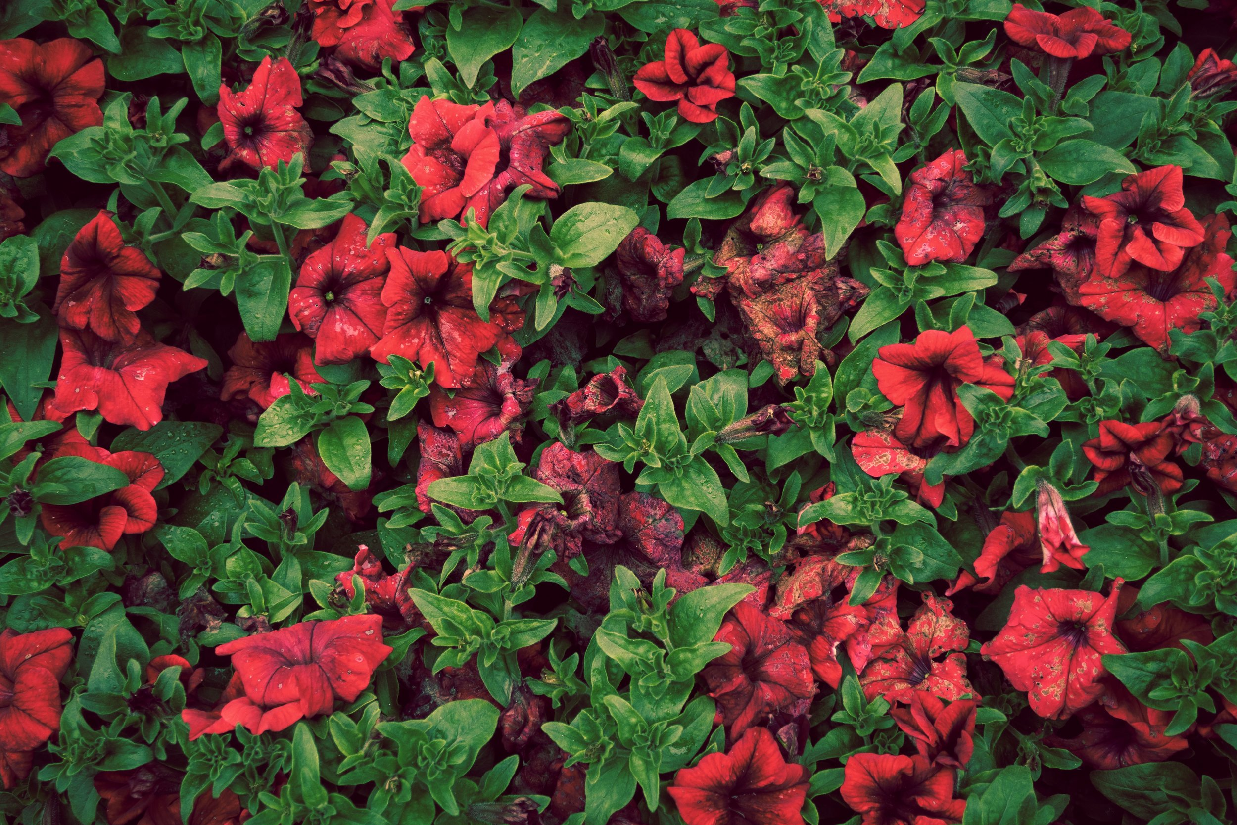 Rotting flowers | G9X Mark II