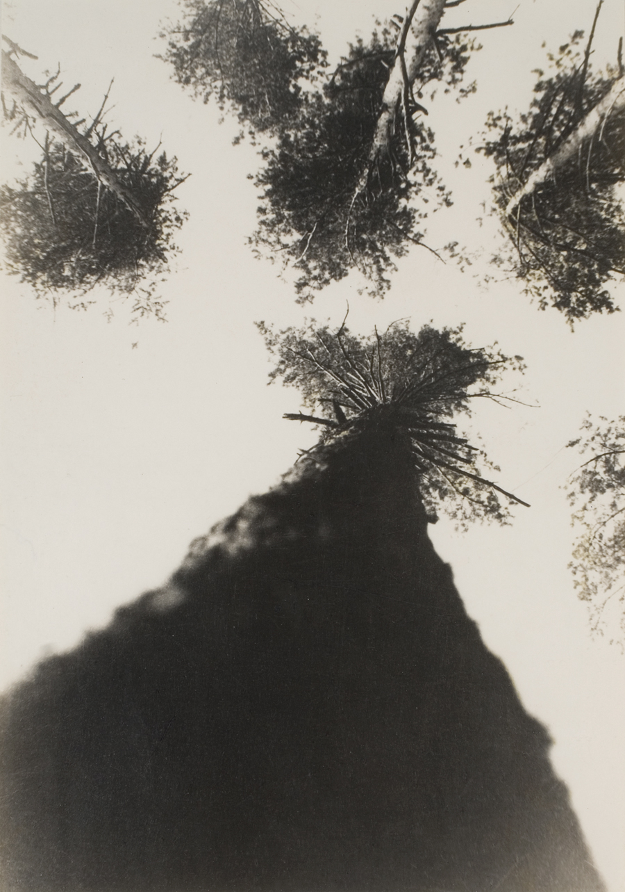 Fig. 4.  Pine Trees in Pushkin Park  (1927)
