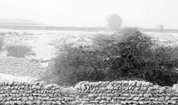 REJUVENATION IN THE QATARI DESERT