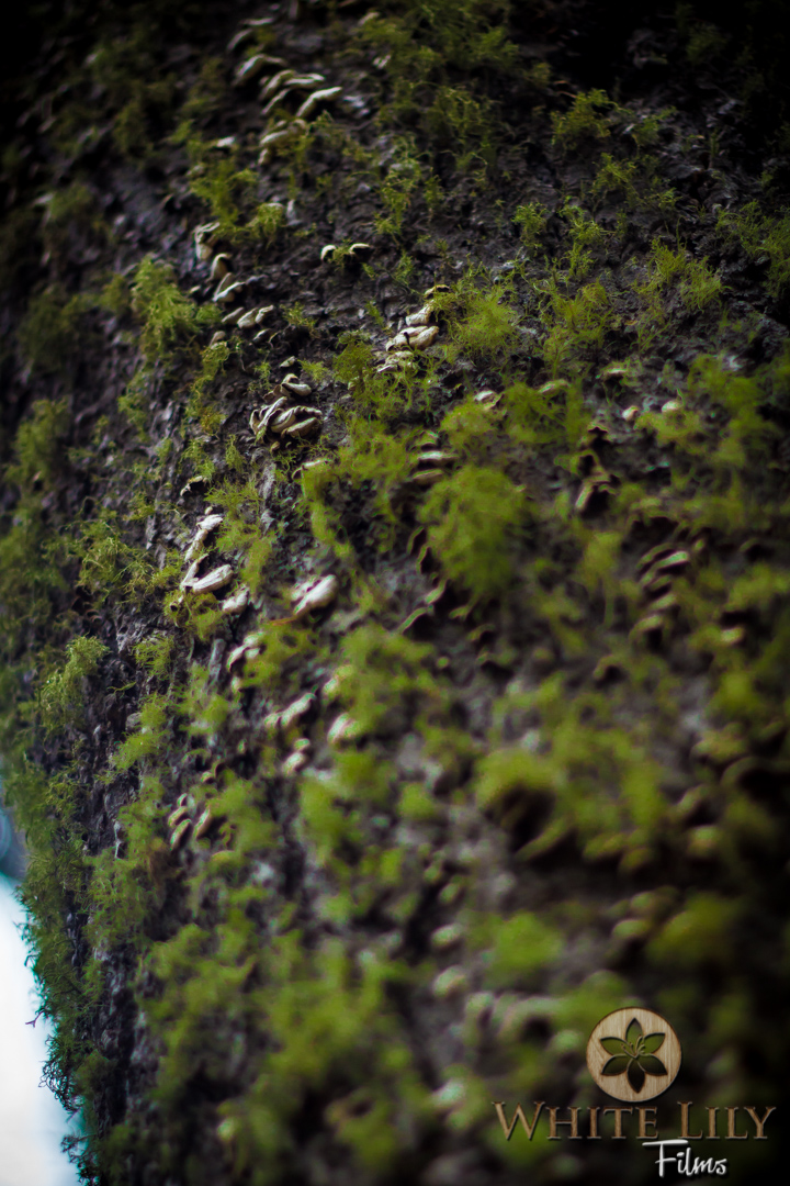 #112 - Mossy Trunk