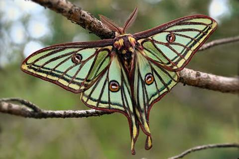 luna_moth_necklace7_1024x1024.jpg
