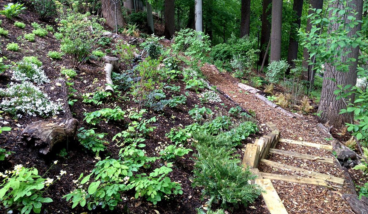 Copy of Woodland Garden