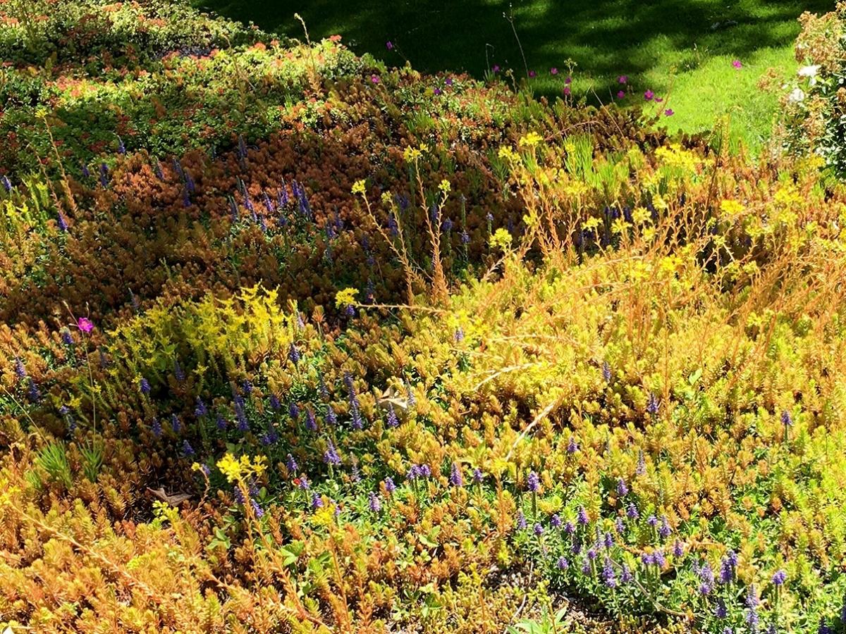 Greenroof Garden