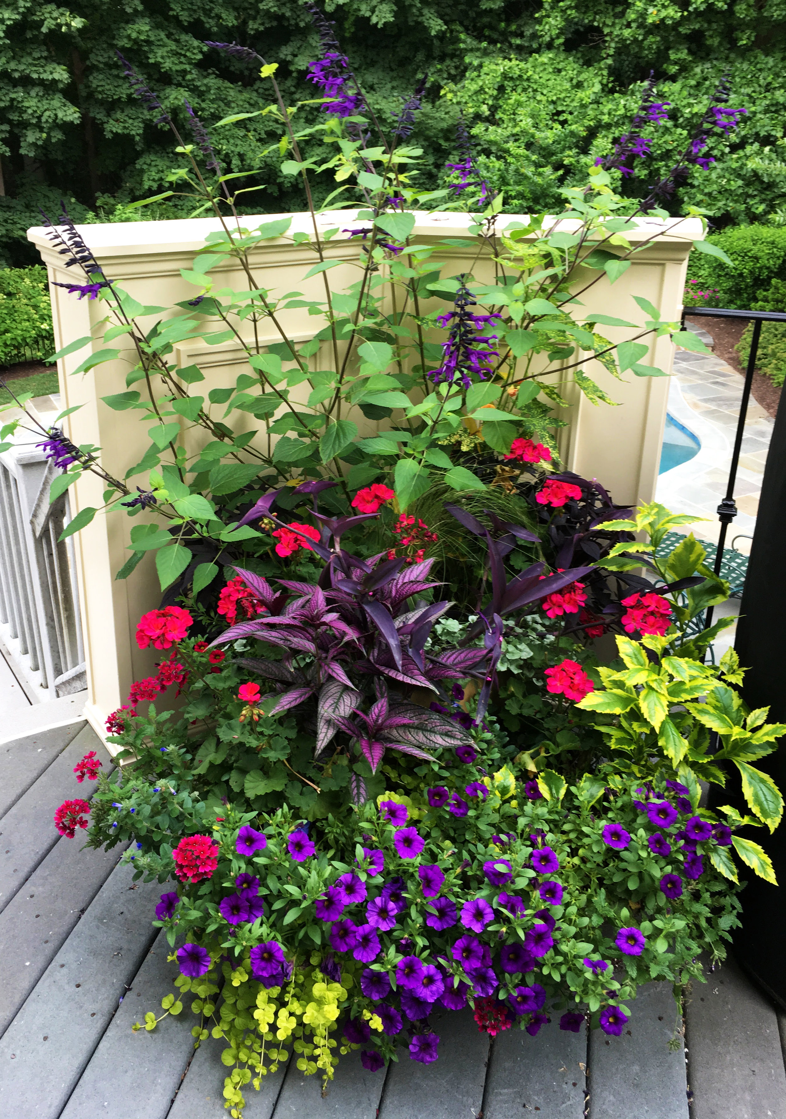Container_Annuals_Summer_01_20190223.jpg