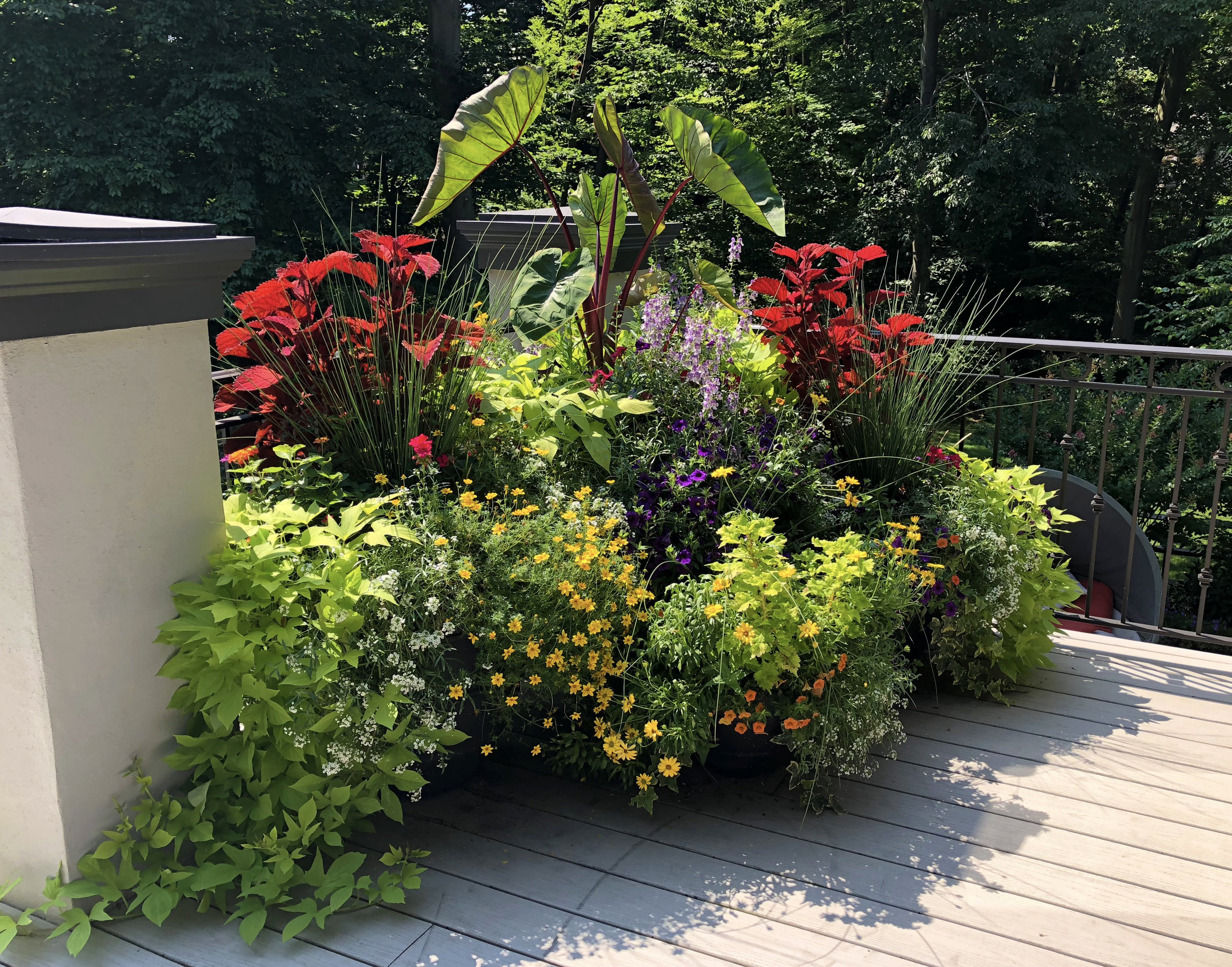 Container_Annuals_Summer_02_20190223.jpg