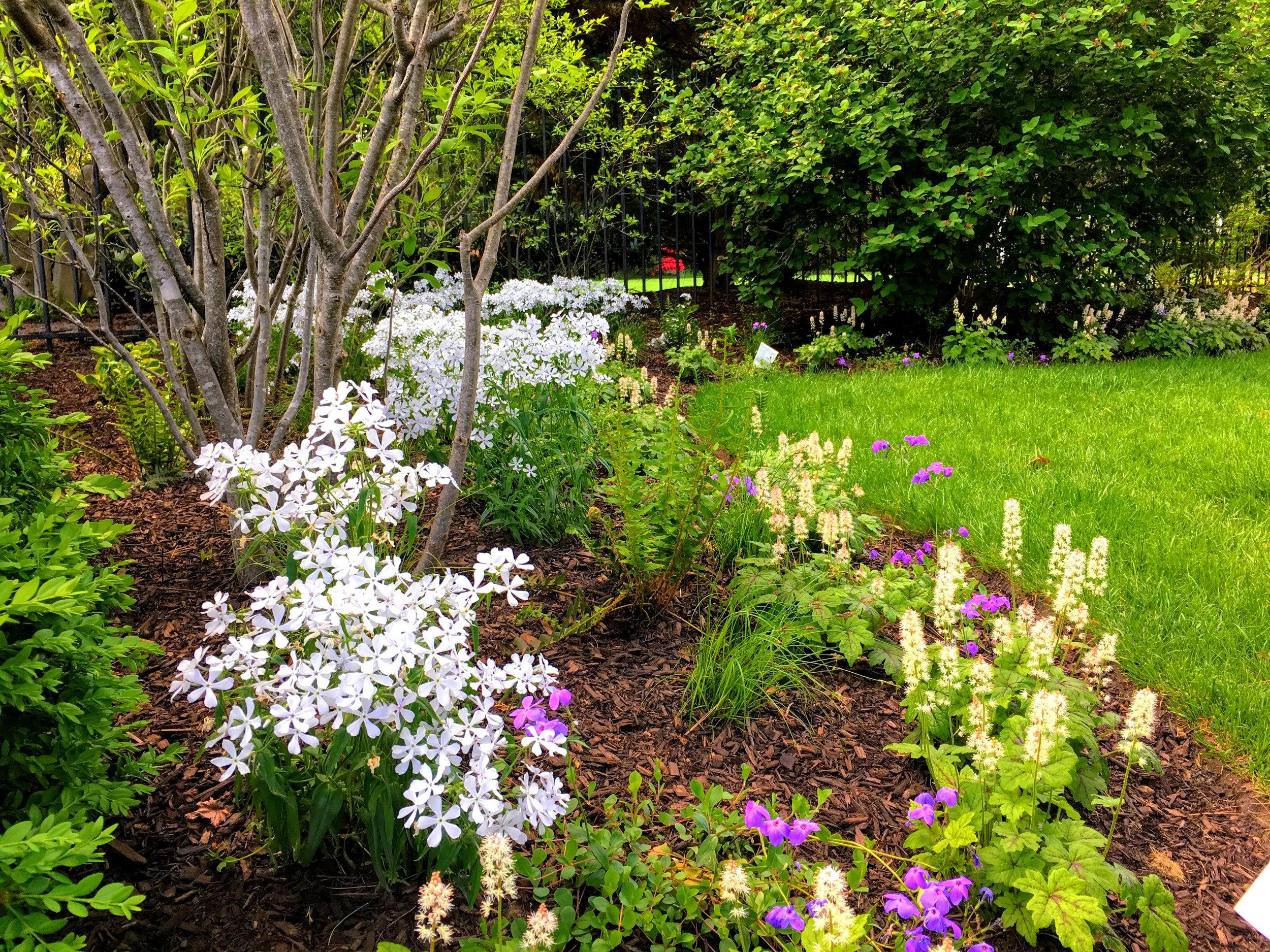 Spring Garden_phlox_foam flower_01_20190223.jpg
