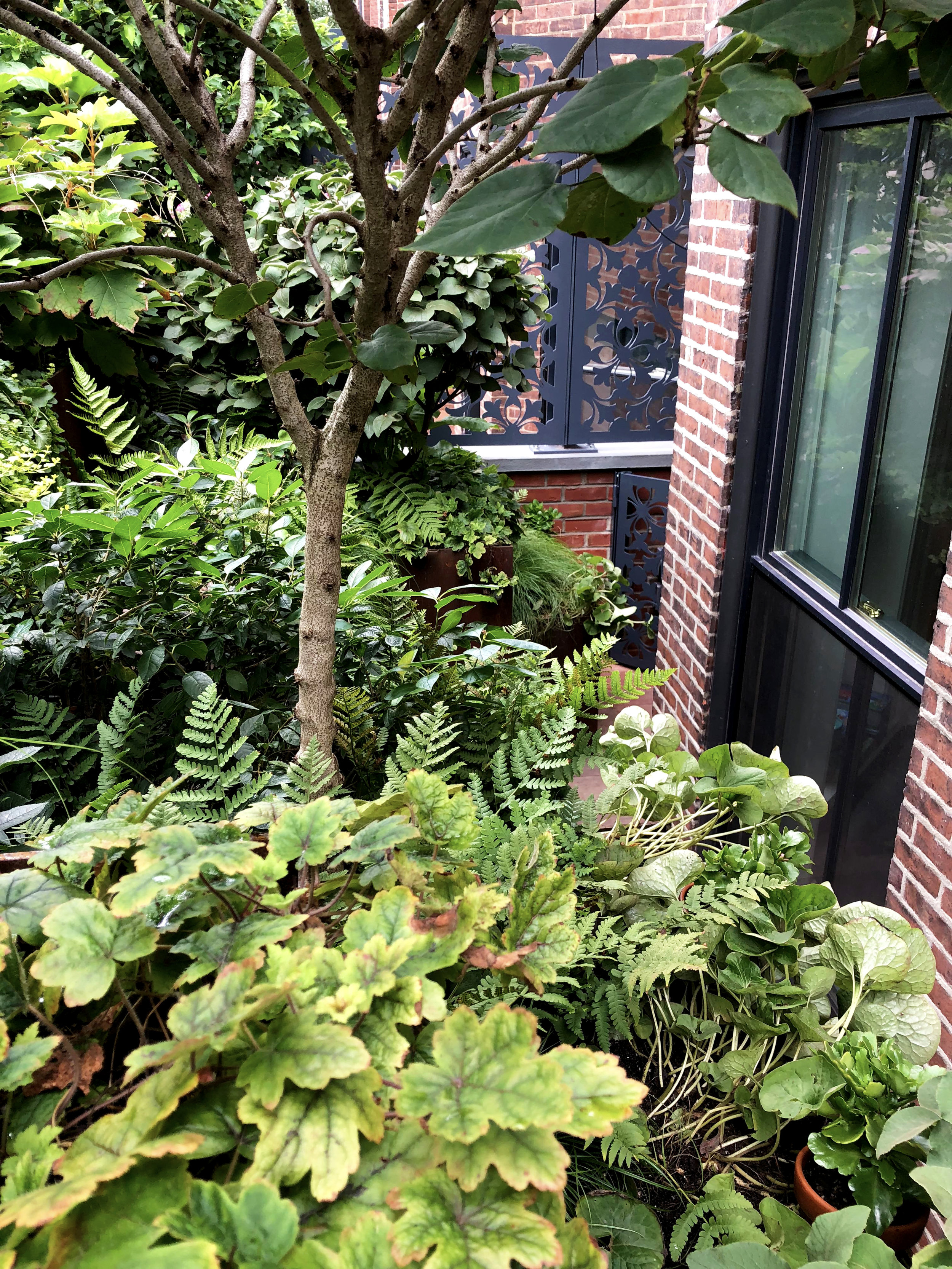 Roof Garden_Ferns_02_20190223.jpg