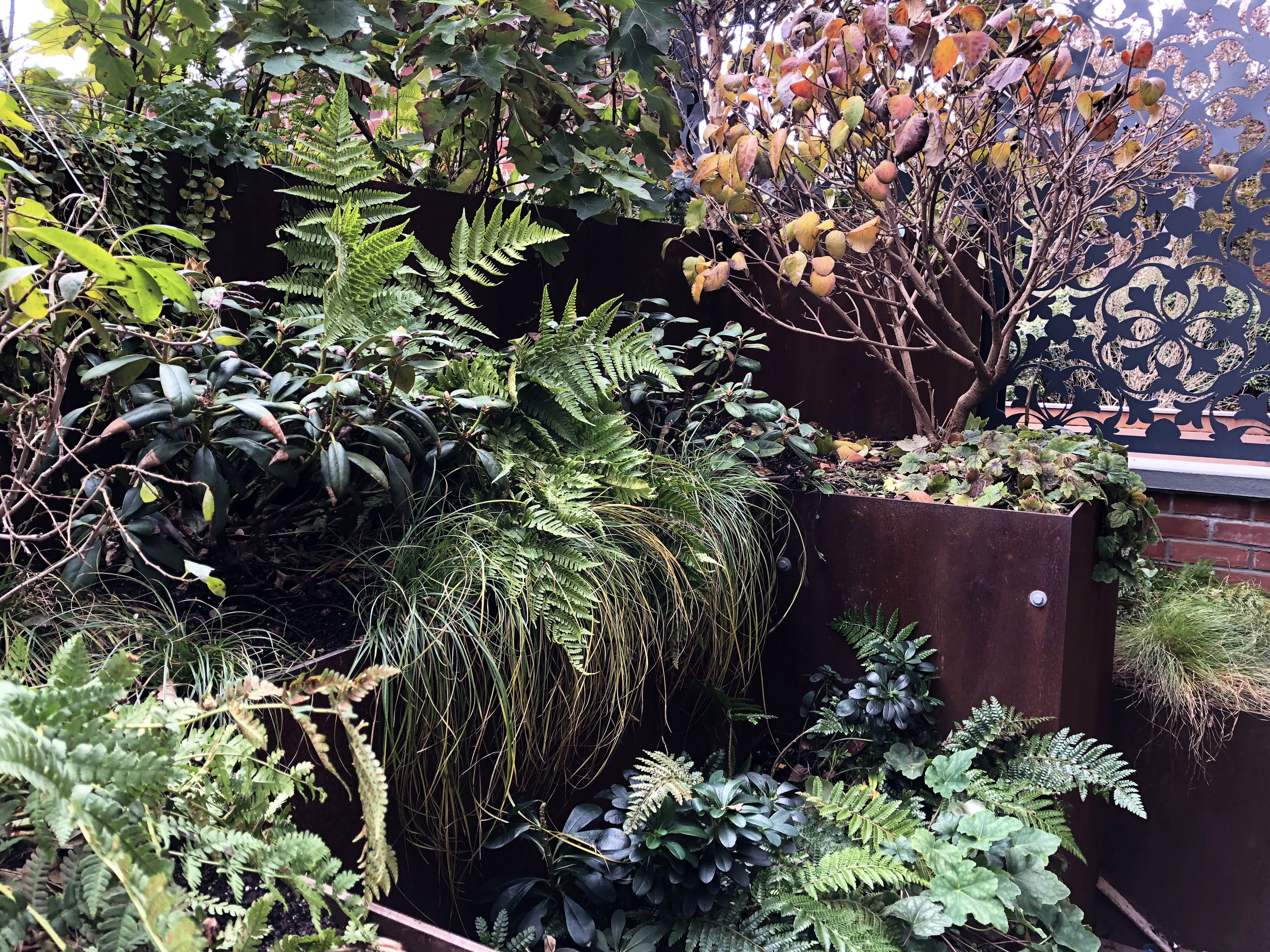 Roof Garden_Winter_02_20190223.jpg