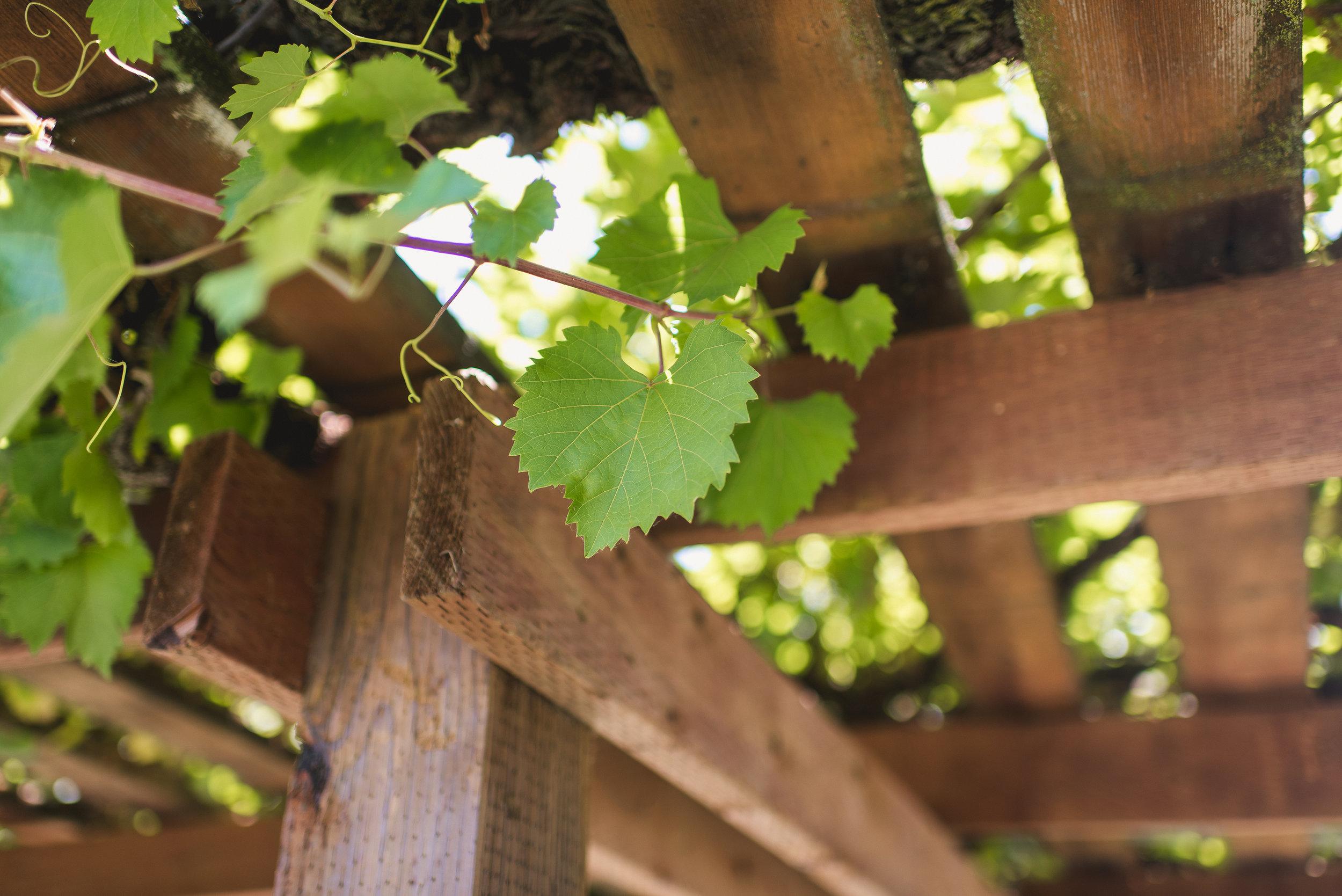 orfila-winery-wedding-photos-t-n-1.jpg