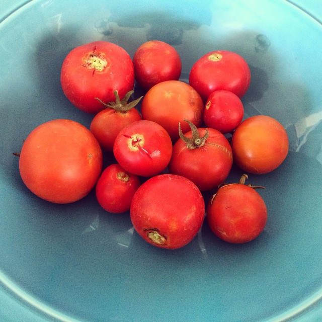 1st harvest.