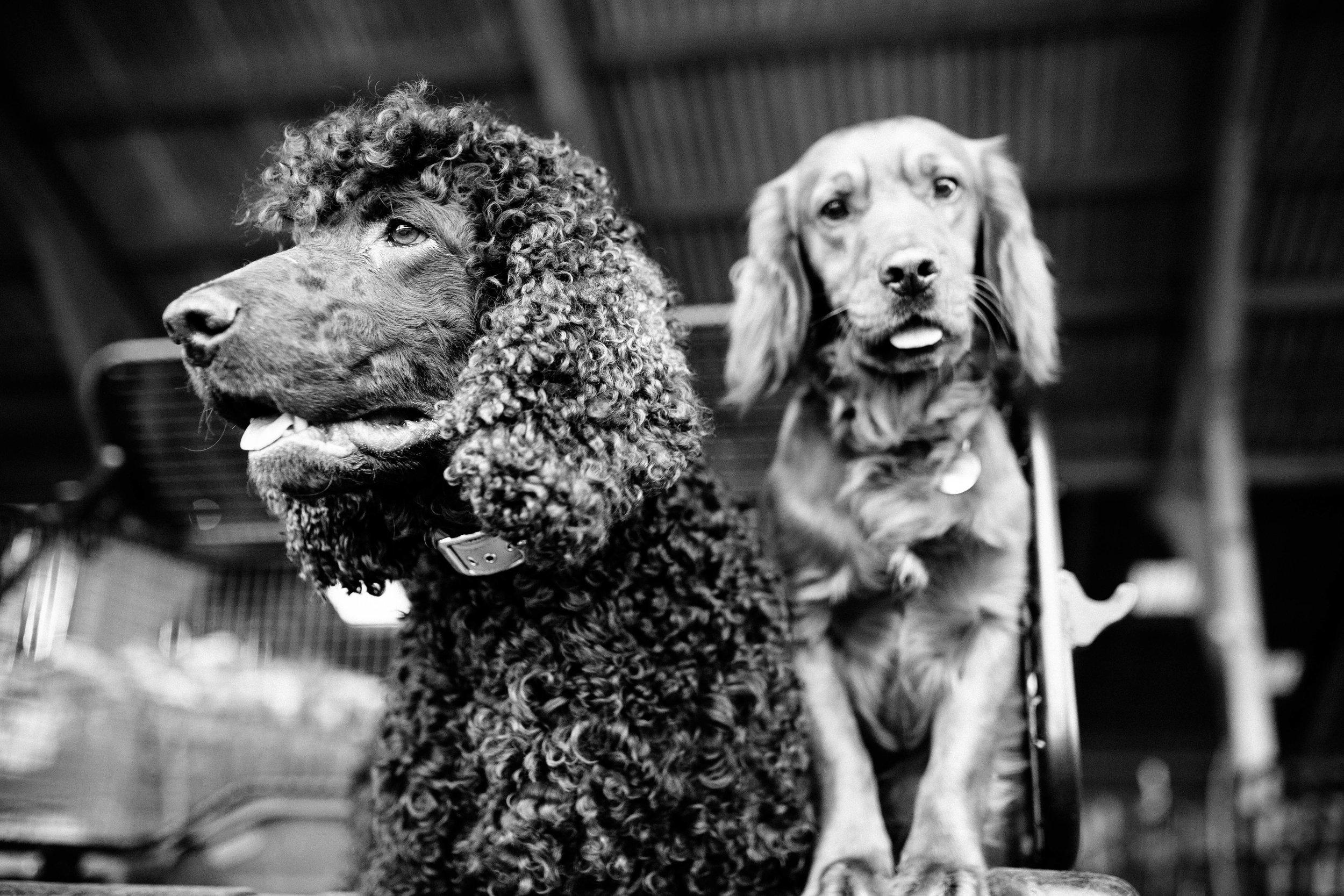 HORSE FARM FAMILY DOG PHOTOSHOOT 00007.JPG
