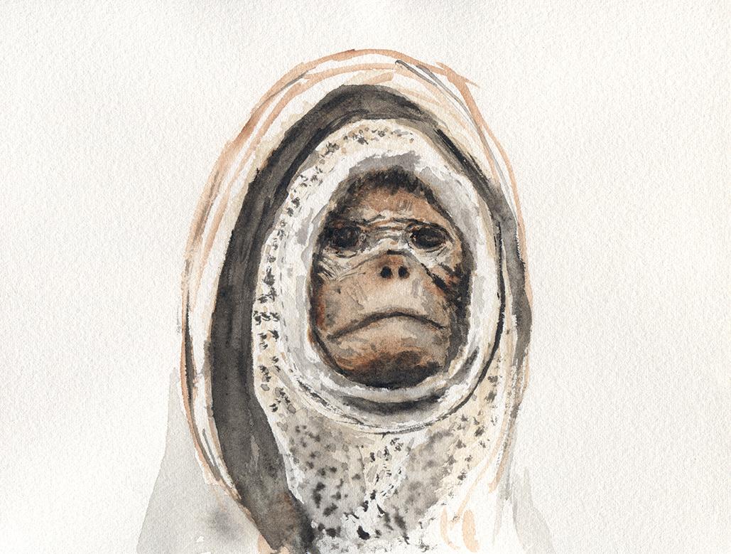 sam-monkey-watercolour.jpg