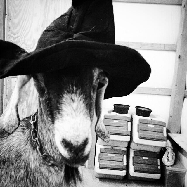 I found this witch in the barn on Halloween. She thinks she's so funny. ;)