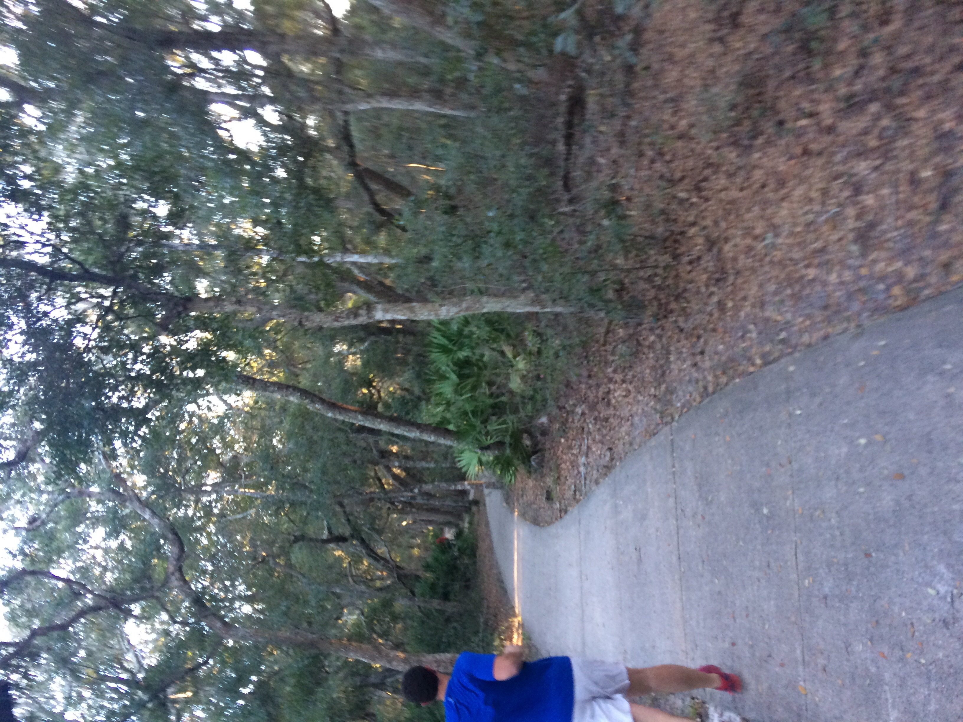We've enjoyed running on the beach, but the jogging trails are beautiful here, too.