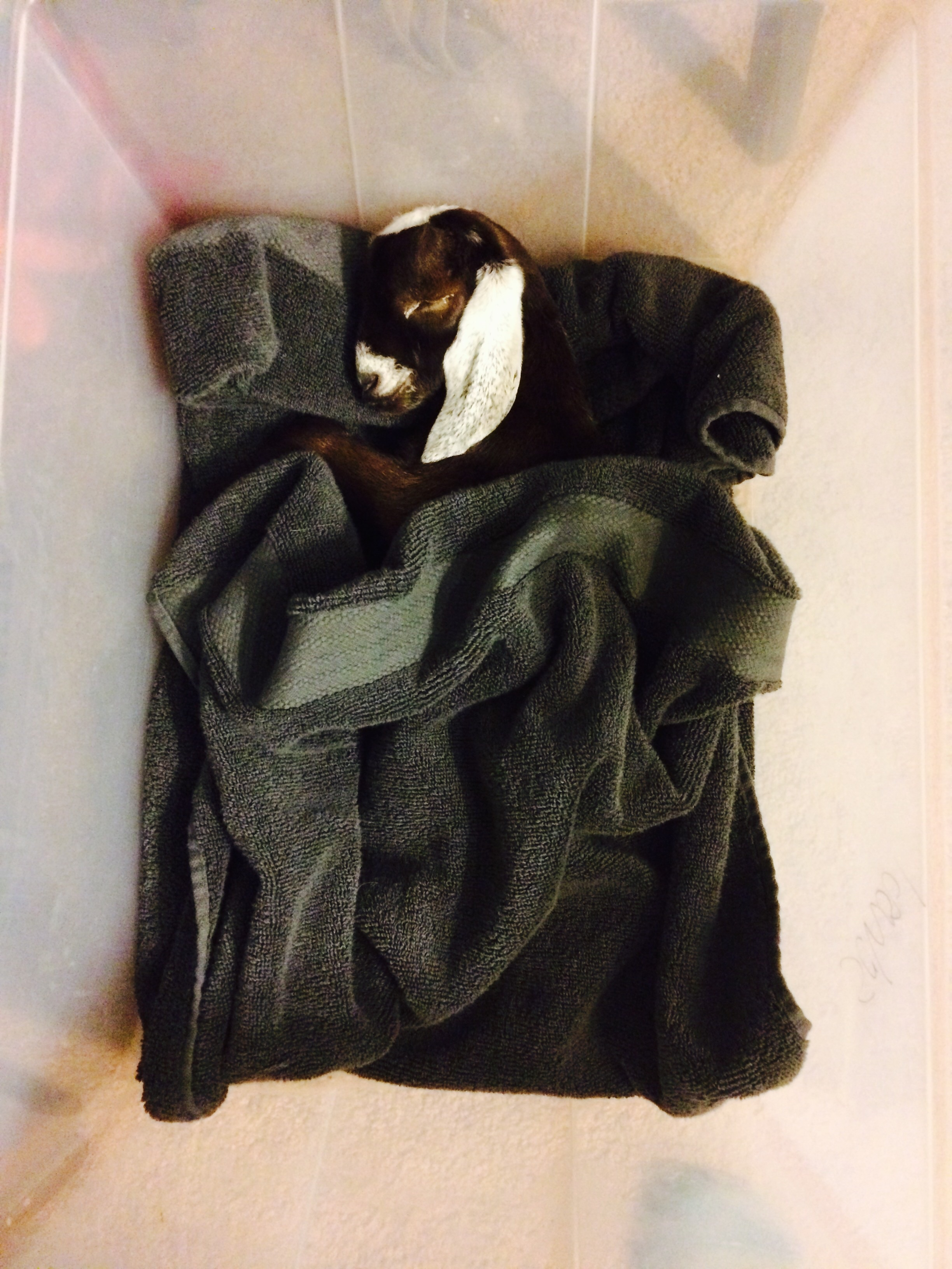 """Girl 2 tucked him in """"snug as a bug"""" last night, knowing that it may be the last time she'd see him."""