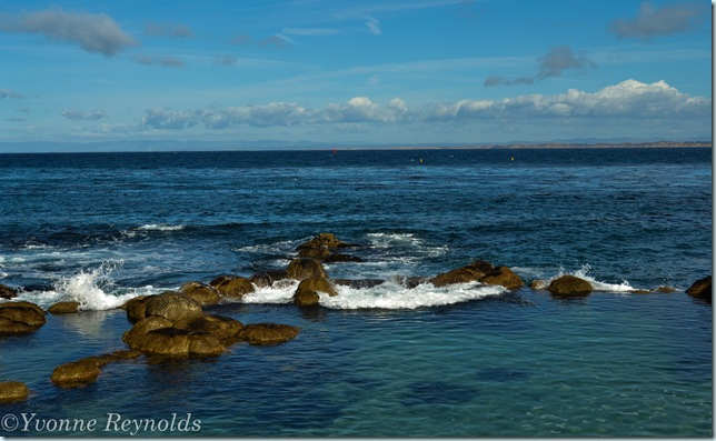 13_Jan_Monterey Bay Aquarium_007_edit