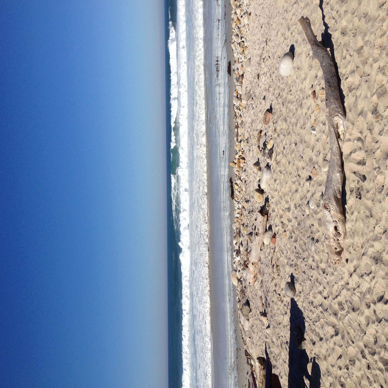beach along 17 mile drive