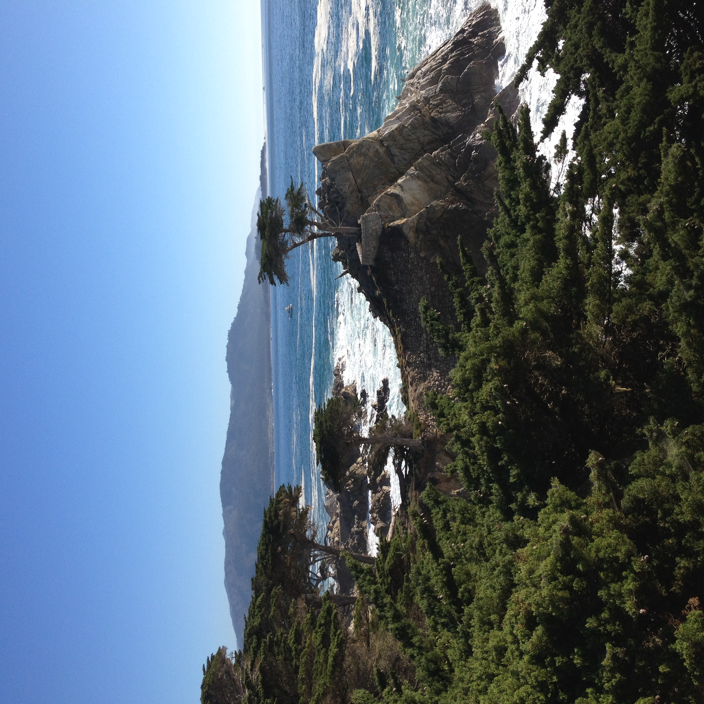 the lone cypress tree along 17 mile drive