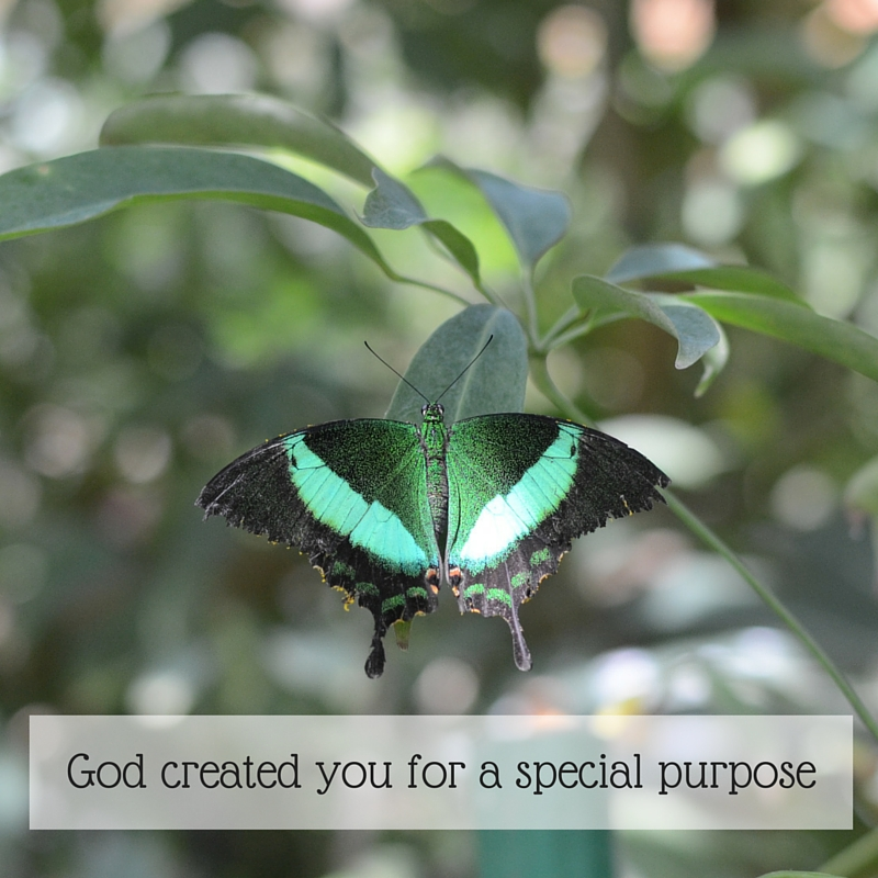 God created you for a special purpose
