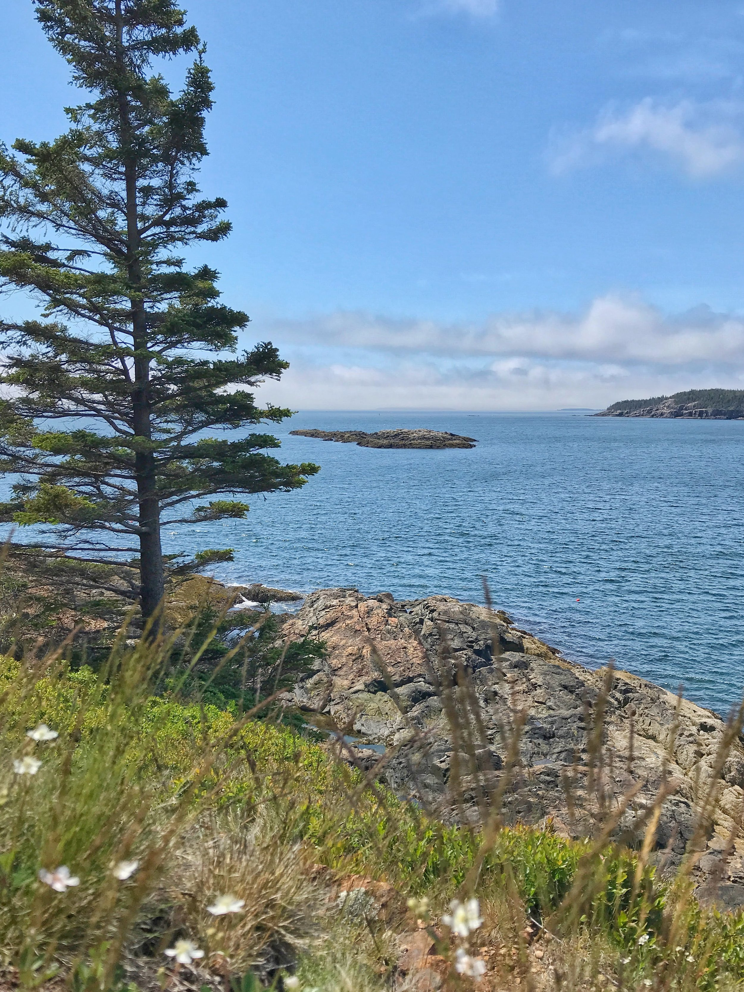 View from Great Head Trail Acadia National Park