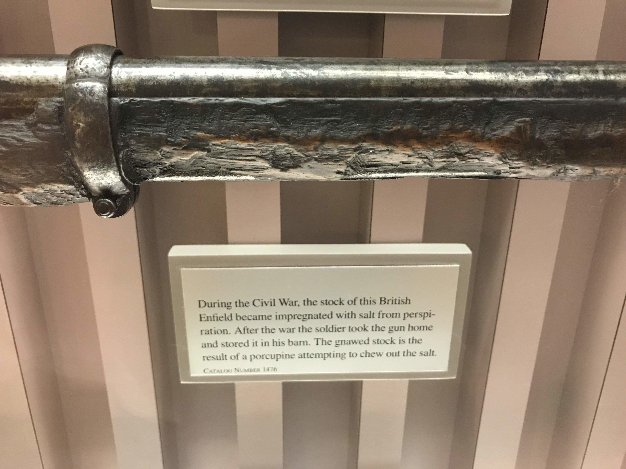 Civil War rifle eaten by a porcupine
