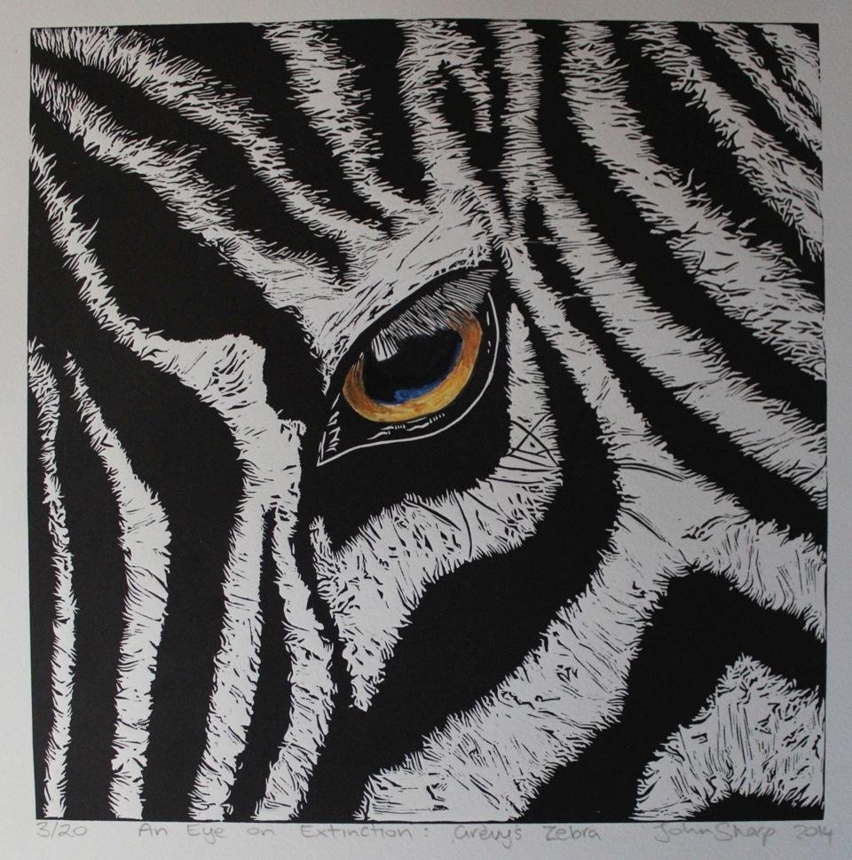 Grevy's Zebra.jpeg
