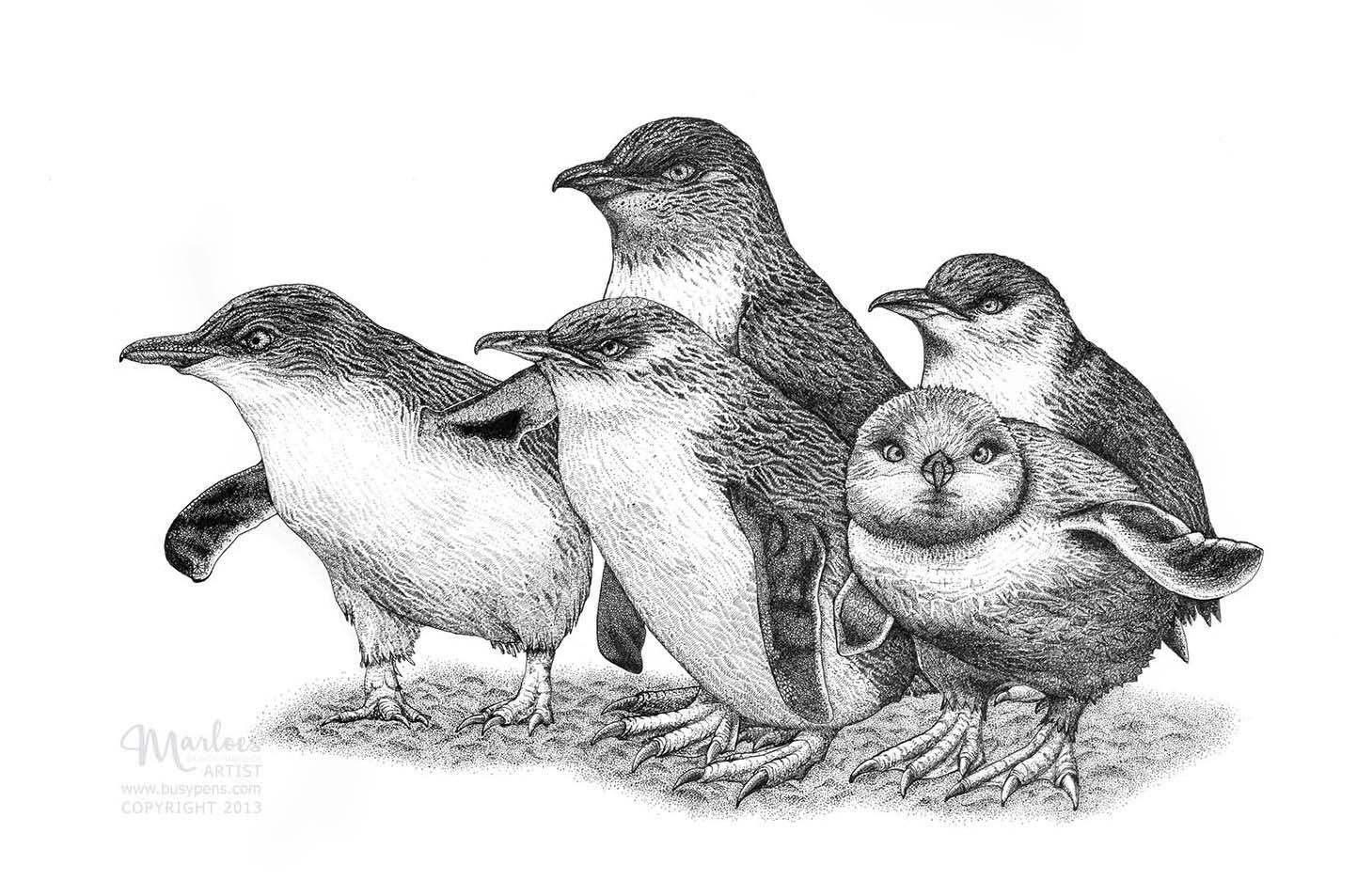 Fairy penguins - web.jpg