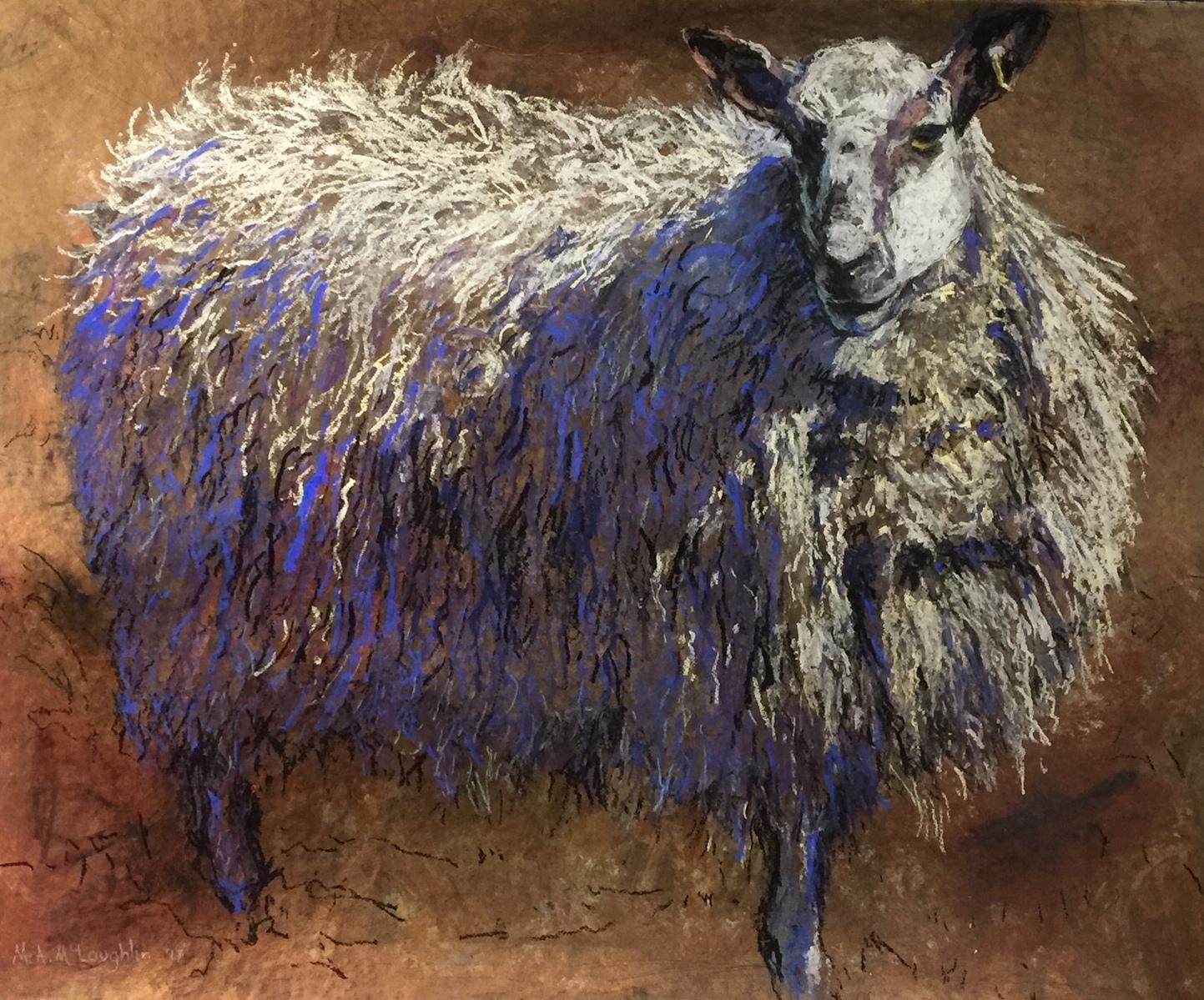 Irish sheep.JPG