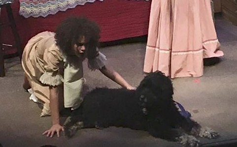 "Here's Jasper in his new home:  the Evanston High School stage!  He just appeared in the ETHS production of ""The Miracle Worker.""  As Helen Keller's dog, most beautifully ironically.  He pretty much sat there the whole time, until they pulled him off the stage.  Beers aren't allowed on the premises."
