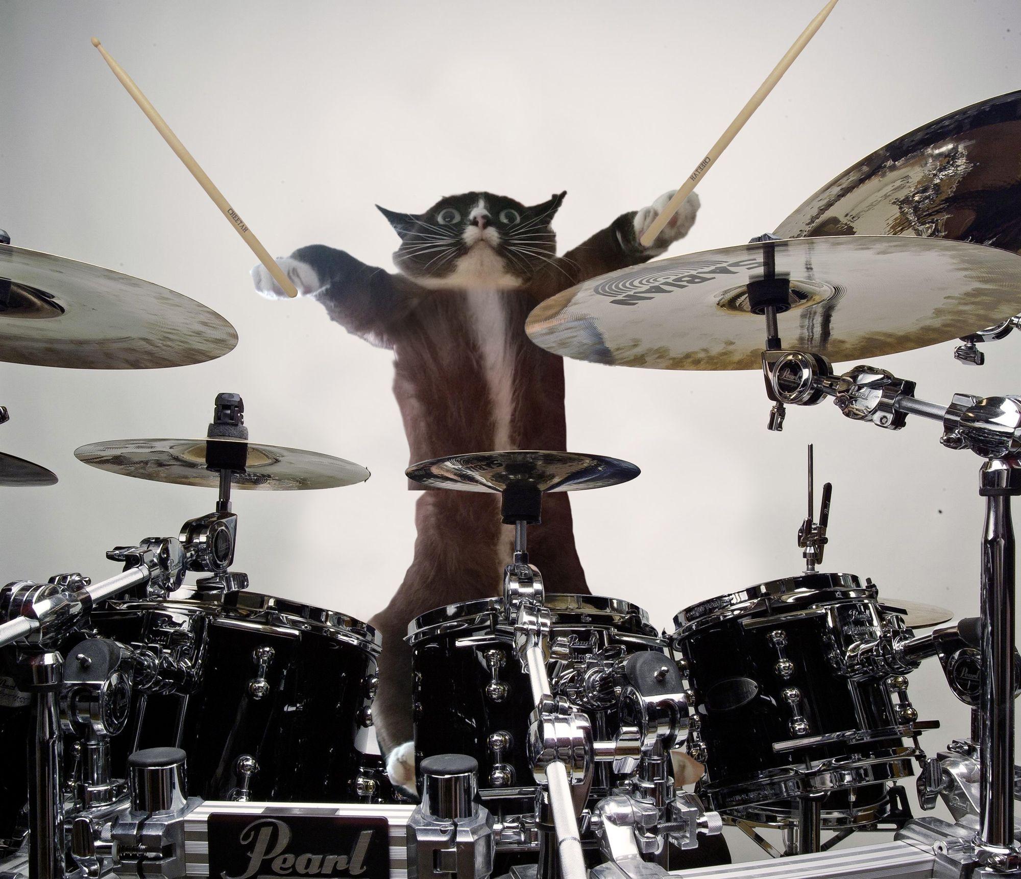 Terrified-cat-drums.jpg