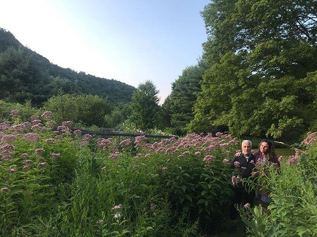 Wildflowers and Eupatorium. @johnpaulphilippe 💚 @b.c.reilly