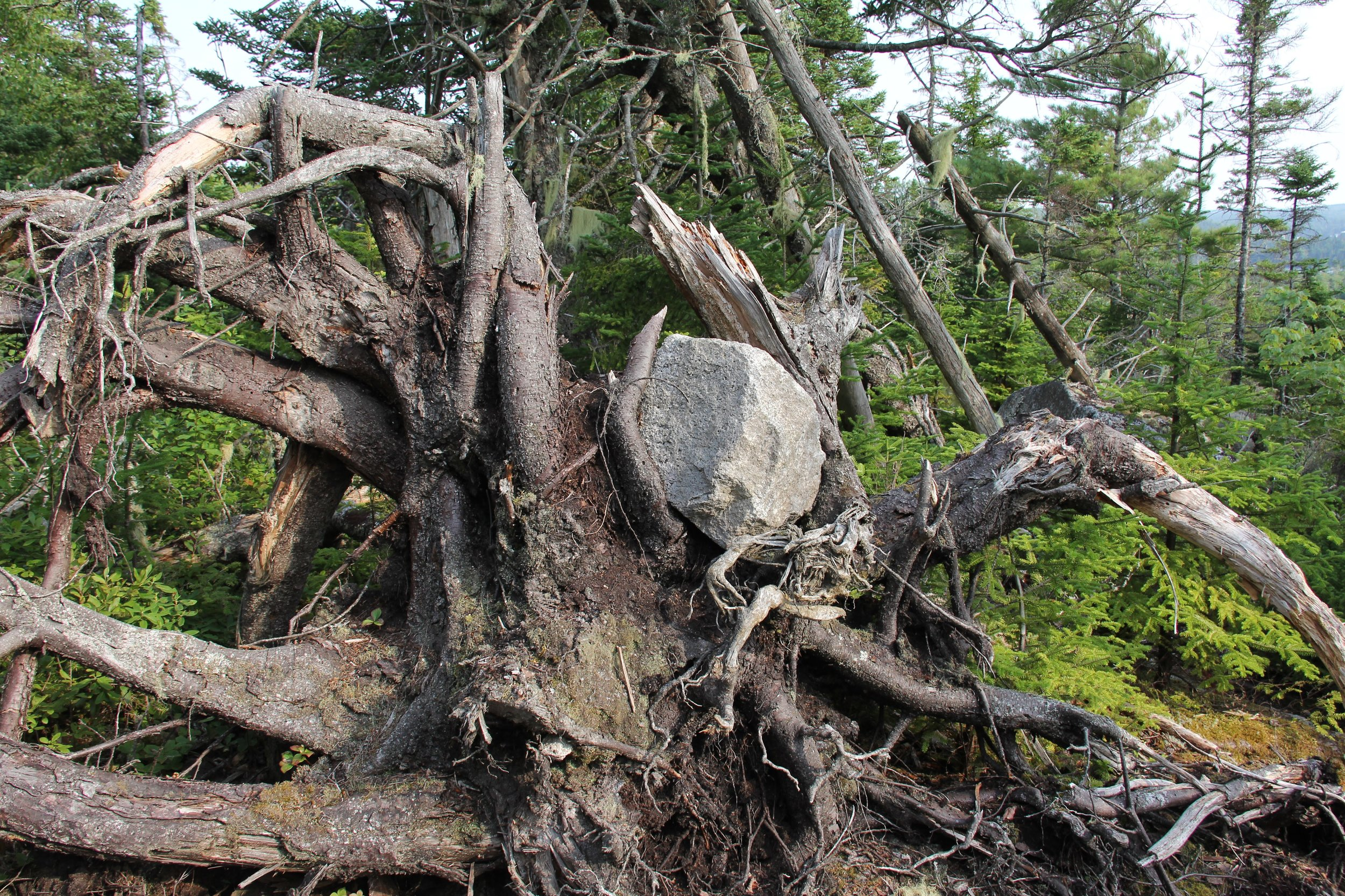 Rock-In-Tree